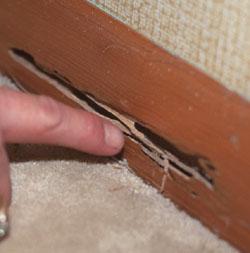 termite_3_image